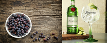 Know your liquid: Gin